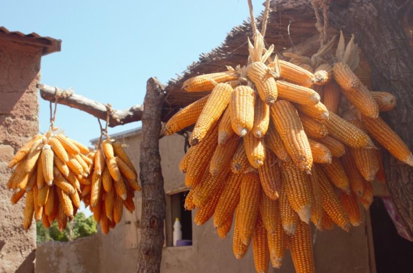 Corn Mali 2