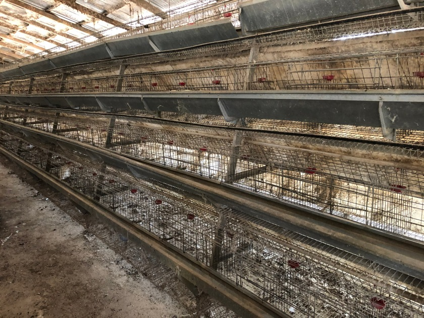 2020-1-31 Chicken Farm (39)