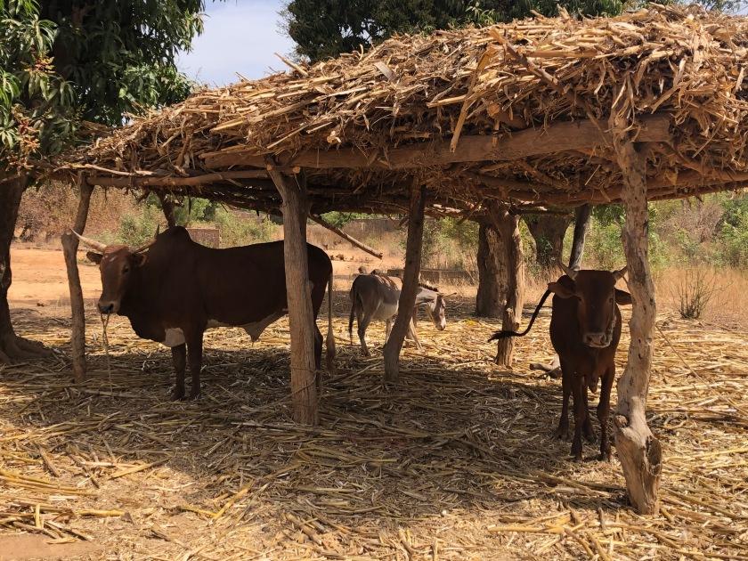 2020-1-31 Keita Family Mountougoula (6)