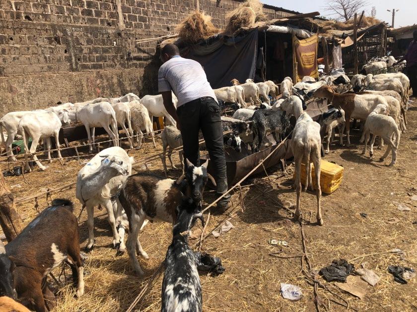 2020-2-16 Cattle Market (10)