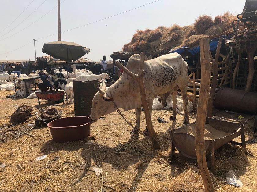 2020-2-16 Cattle Market (11)