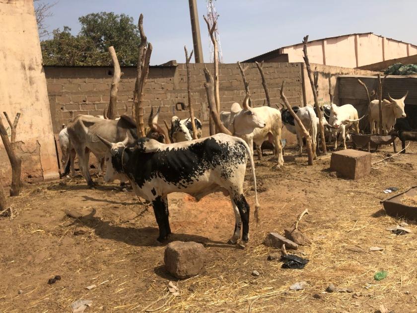 2020-2-16 Cattle Market (18)