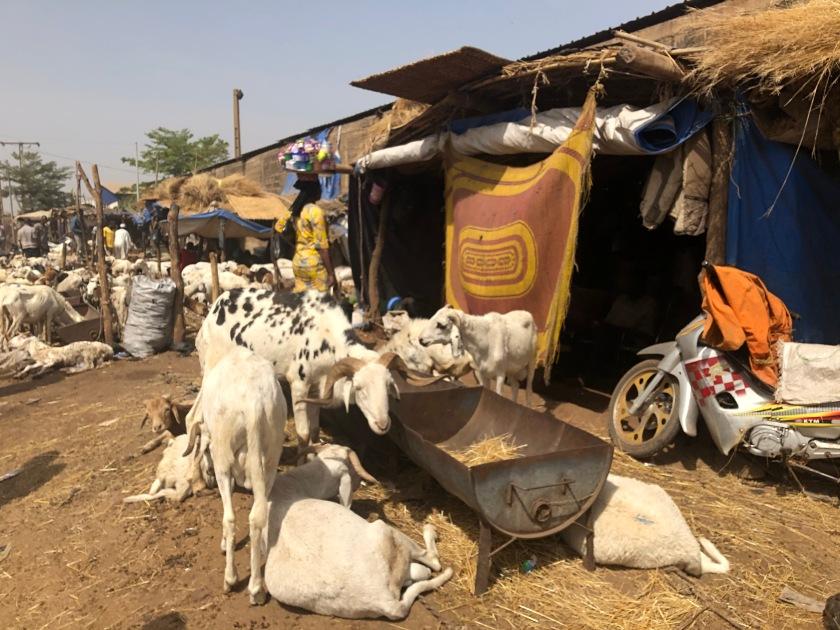 2020-2-16 Cattle Market (29)