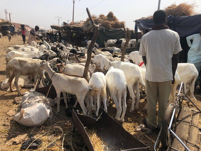 2020-2-16 Cattle Market (7)