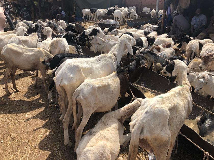 2020-2-16 Cattle Market (8)