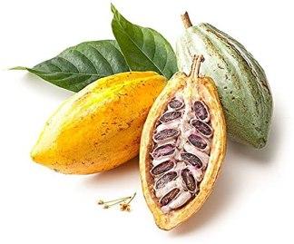 Cacao fruit inside..1